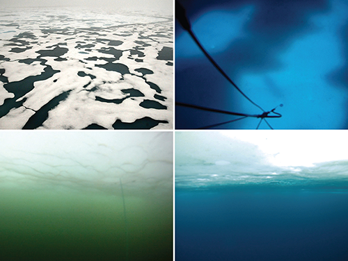 "Clockwise from upper left: 1. Shallow melt ponds appear black on solid ice pack in the Arctic. 2. Underwater ""skylights"" created by melt ponds are seen from beneath the surface. 3. Without an algal bloom, water underneath sea ice looks clear. 4. With a massive under-ice algal bloom present, the water is murky and green."